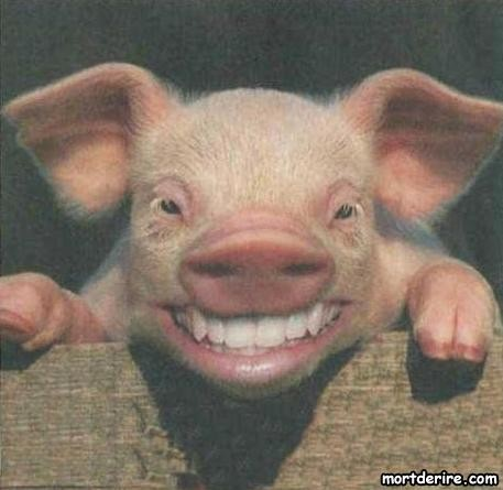 sourire-de-cochon.jpg